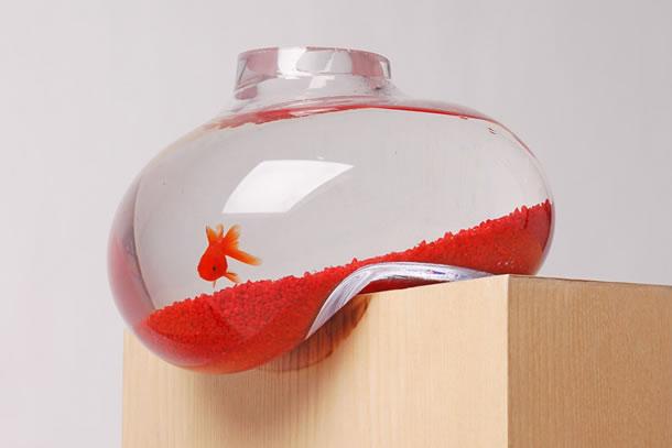 Nella boccia dei pesci rossi finisci il ricordo perduto for Dove comprare pesci rossi