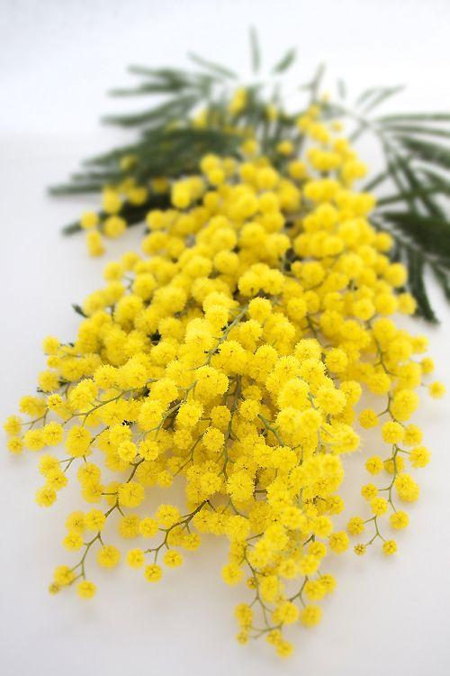 mimosefiorite